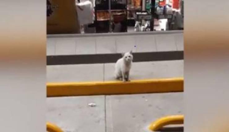 gatto convince passanti compragli cibo
