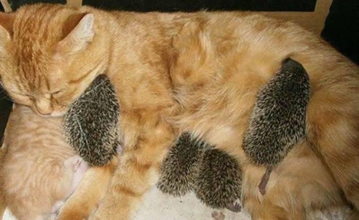 gatta allatta cuccioli non suoi