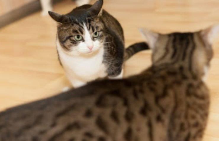 gatti non vanno d accordo