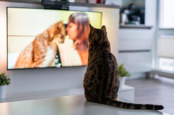 gatto TV