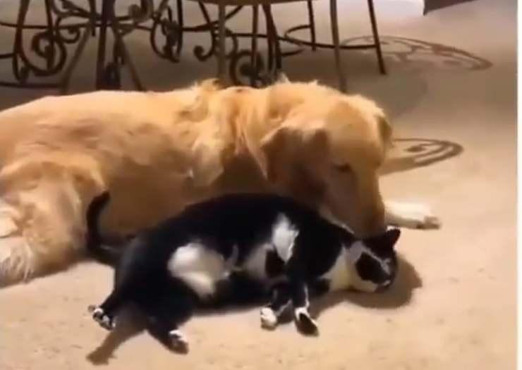 Cane e gatto affettuosi