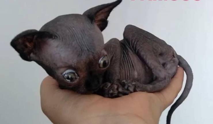 il Gatto con una grave condizione neurologica