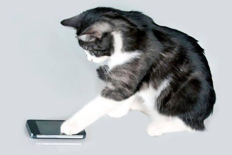 gatto telefono