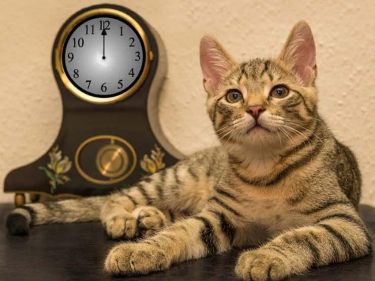 i gatti hanno la percezione del tempo
