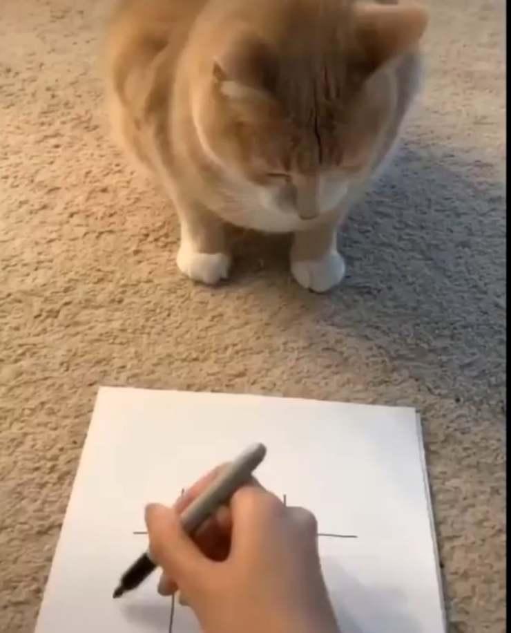 gatto tris