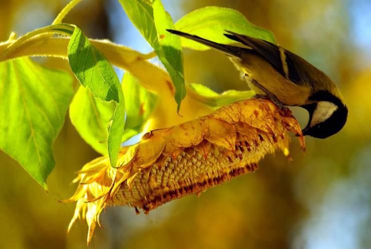 le piante che attirano gli uccelli