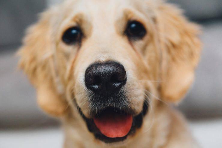 naso del cane freddo