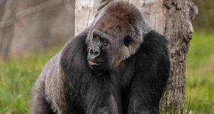 animali zoo coronavirus