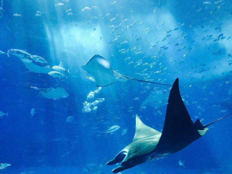 Pesci del film su Nemo