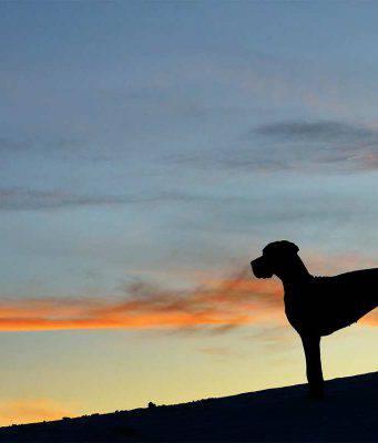 L'alano osserva il tramonto (Foto Pixabay)