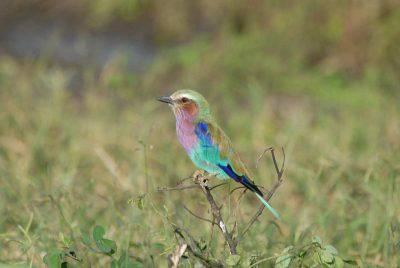 uccellino sul ramo (Foto Pixabay)
