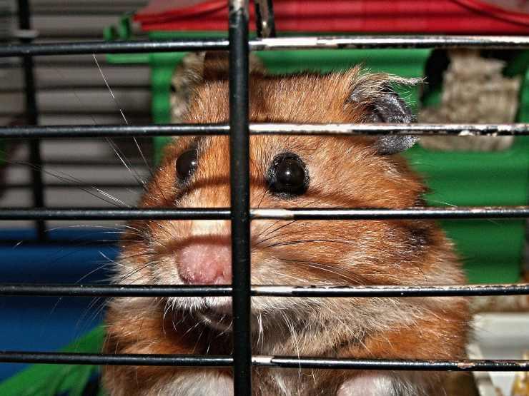 rabbia nella gabbia