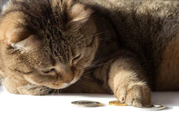 i gatti possono contare