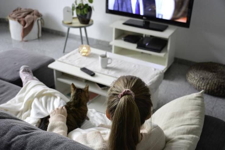 i gatti riescono a vedere la TV