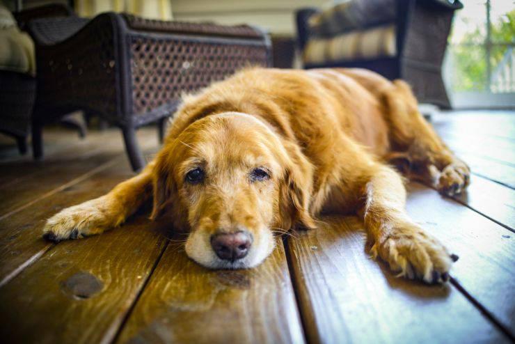 cane anziano dorme poco