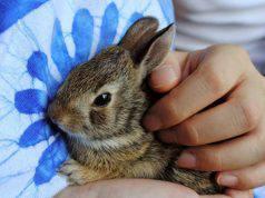 il coniglio sta male