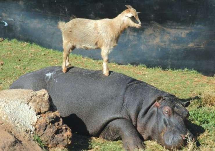 animali maggior rischio estinzione dimensioni
