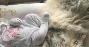 Milo e la neonata (Foto video)