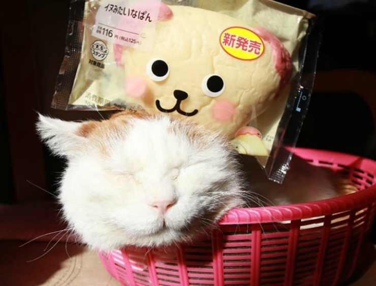 Il gatto con il pupazzo (Foto Instagram)