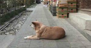 La cagnolina aspetta la nonna (Foto video)