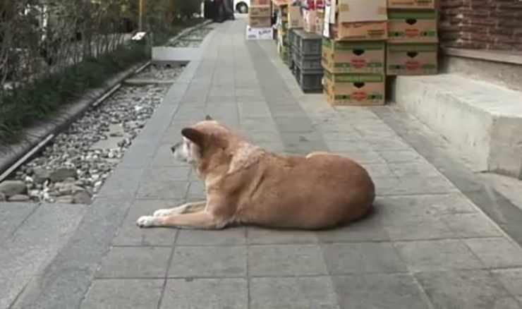 L'attesa della cagnolina (Foto video)