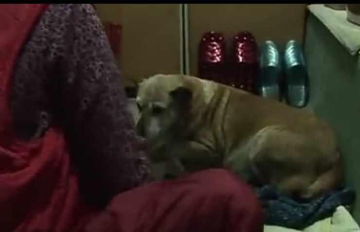 La cagnolina si riposa (Foto video)