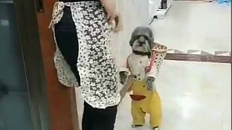 Il cane pronto per fare la spesa (Foto video)