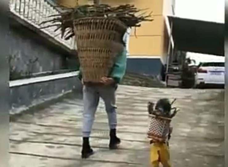 Il cane che porta la legna (Foto video)