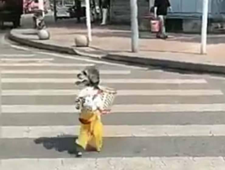 Il cane attraversa la strada (Foto video)