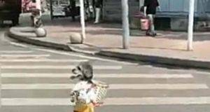 Il cane va al negozio (Foto video)
