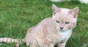 Il gattino piccolo (Foto Instagram)