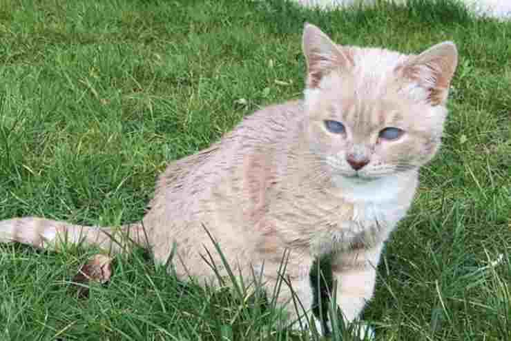 Il gatto nell'erba (Foto Instagram)