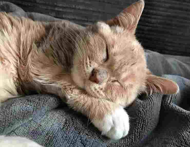 Il gattino che dorme (Foto Instagram)