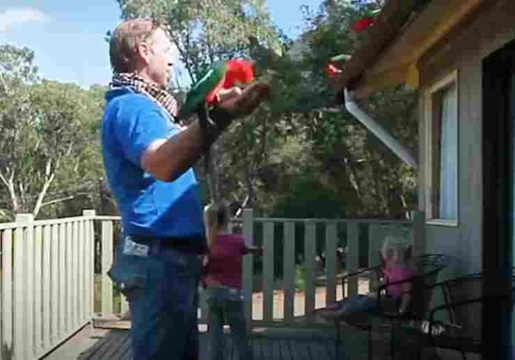 I pappagalli sulle braccia (Foto video)