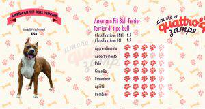 American pit bull terrier scheda razza