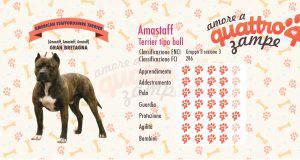 American staffordshire terrier scheda razza