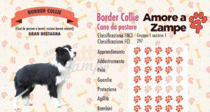infografica cane border collie
