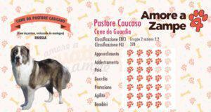 infografica cane CANE PASTORE CAUCASICO caucaso