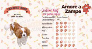 infografica cane CAVALIER KING new