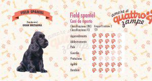 Field Spaniel scheda razza