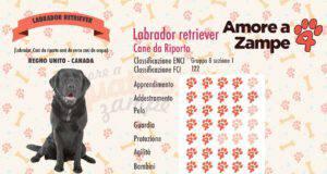 infografica cane labrador retriever
