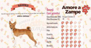infografica cane basenji new