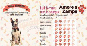 infografica cane bull terrier