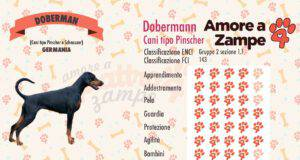 infografica dobermann cane