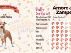 infografica cane staffordsheir terrier