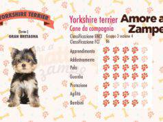 infografica cane yorkshire terrier new