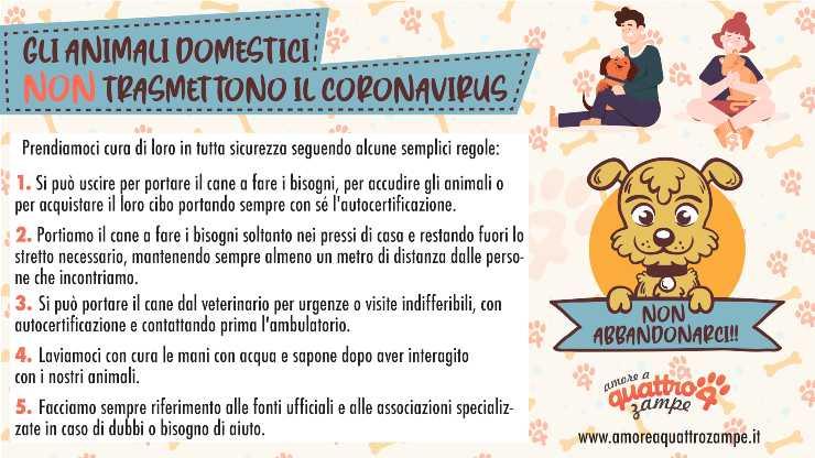 animali coronavirus informazioni