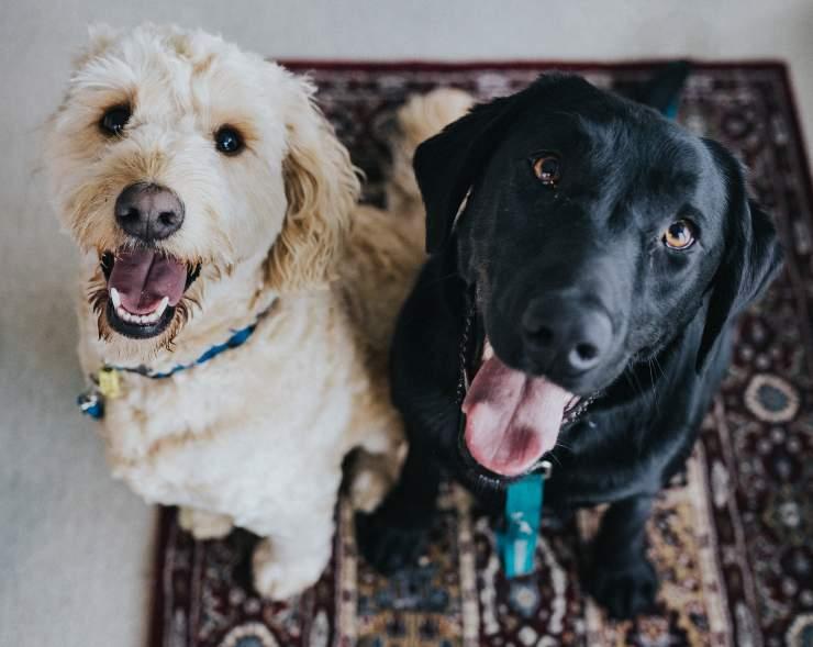 cane maschio o femmina