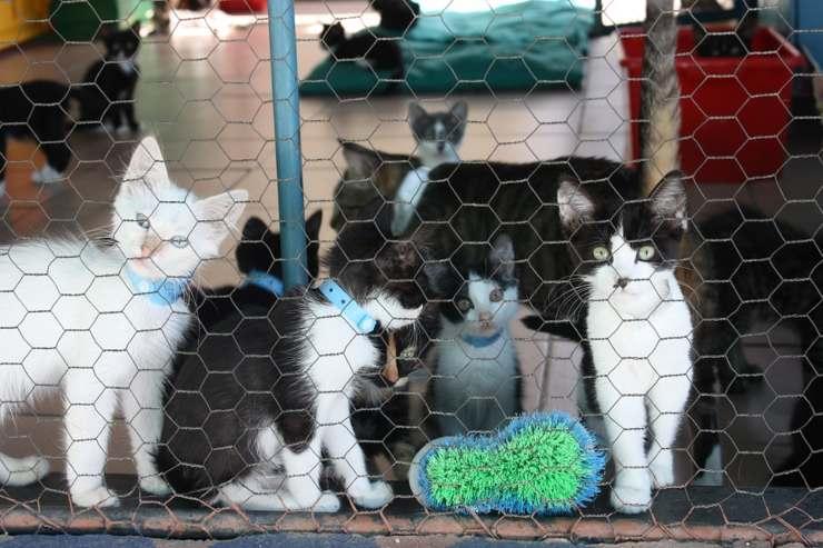 italia zona rossa canili gattili rifugi decreto