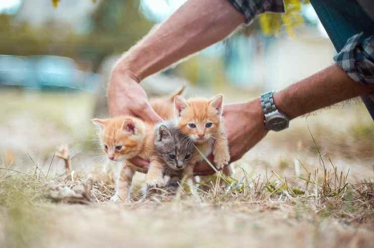 I minuscoli gattini (Foto Pixabay)